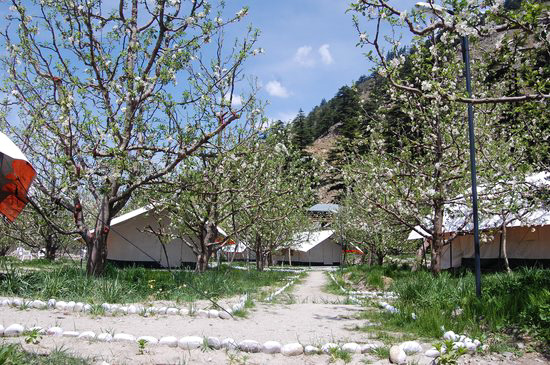 Apple orchards in Sangla Valley, kinnaur, Himachal