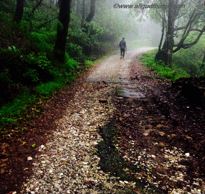 Trails of Binsar Wildlife Sanctuary: monsoon road trips to the Hills