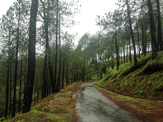 Why we love monsoon road trips to the Hills