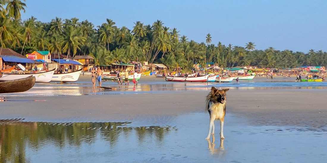 Story of Stray Dog Bite & Rabies Vaccine ordeal in Goa